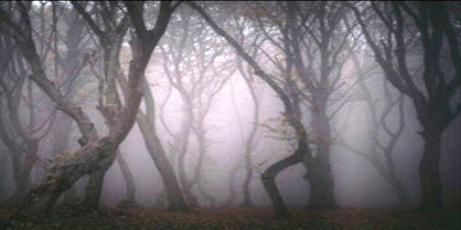 ترسناک ترین جنگل ایران را بشناسید