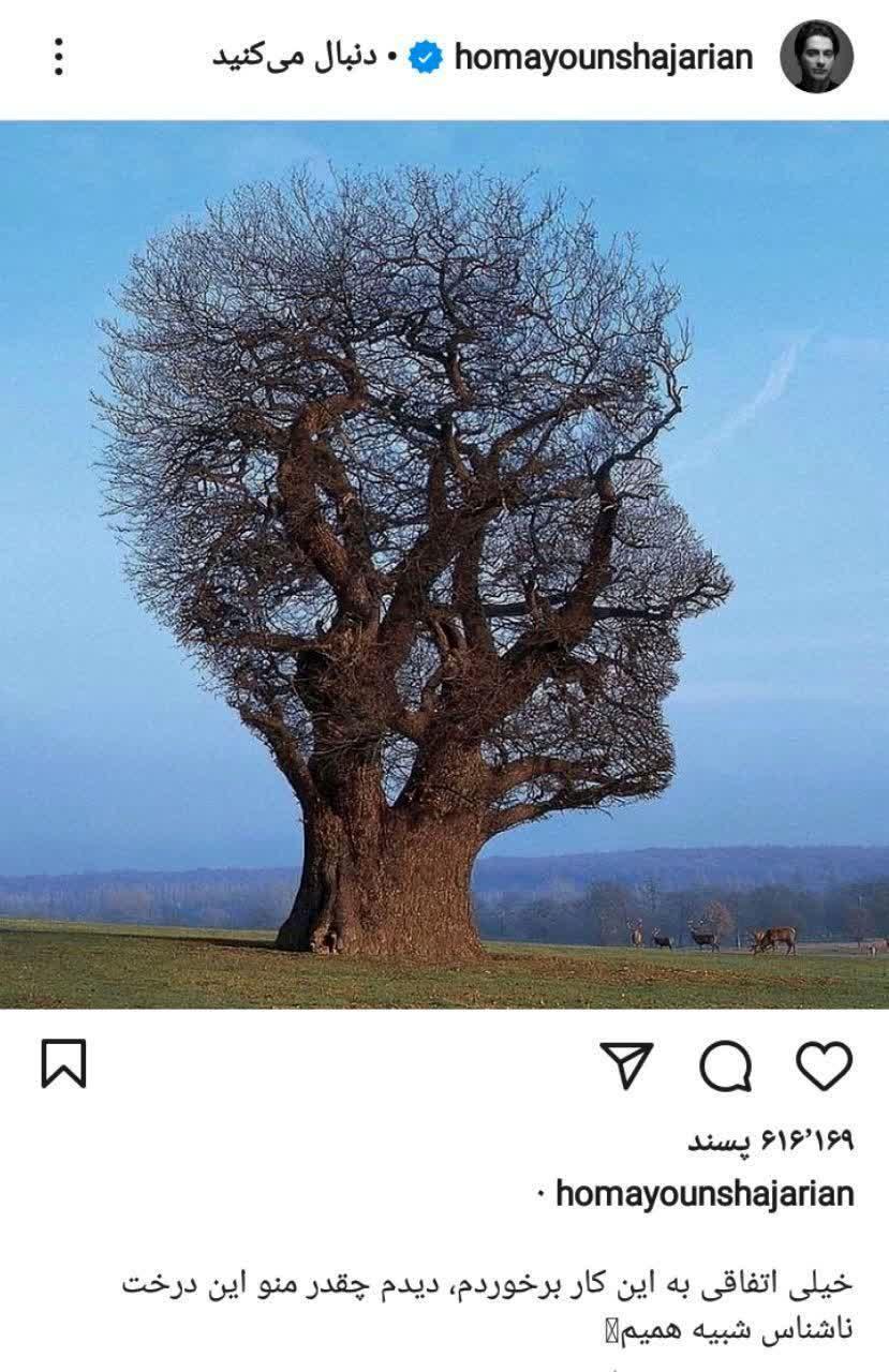 /درختی که همایون شجریان خود را به آن تشبیه کرد