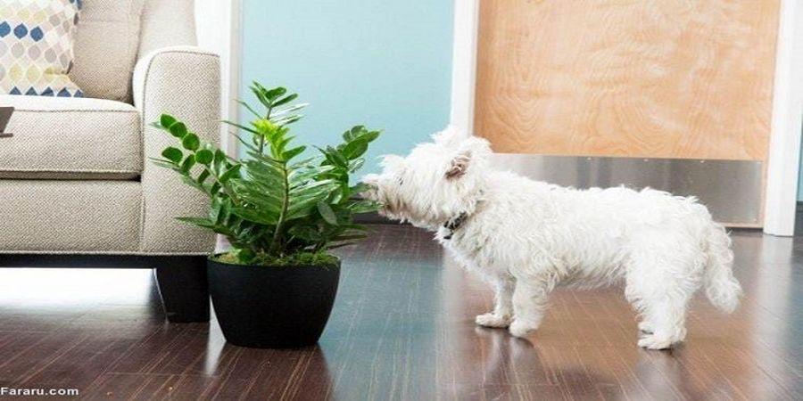 خطرناکترین گیاهان آپارتمانی را بشناسید