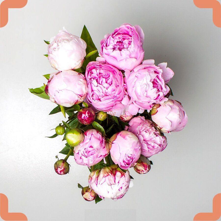 هر گل نماد چیست و آن را به چه کسی هدیه دهیم؟