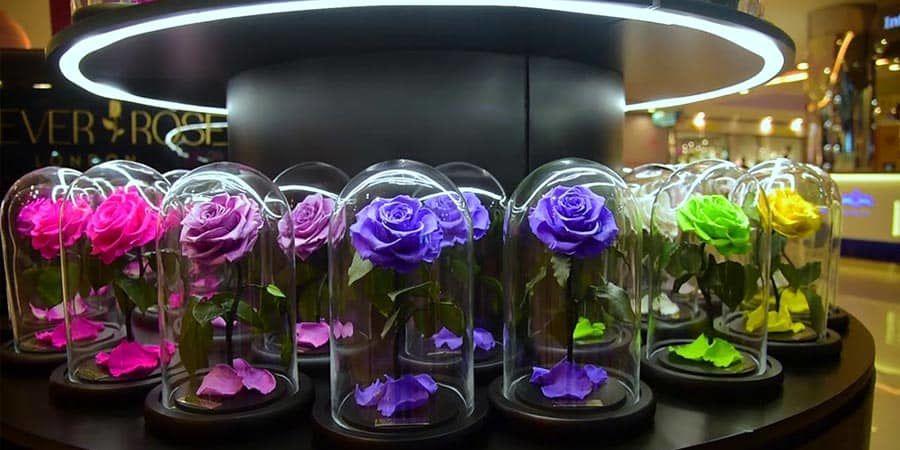 گل رز جاودان دیو و دلبر دلبرانهترین هدیه برای عشق زندگیتان
