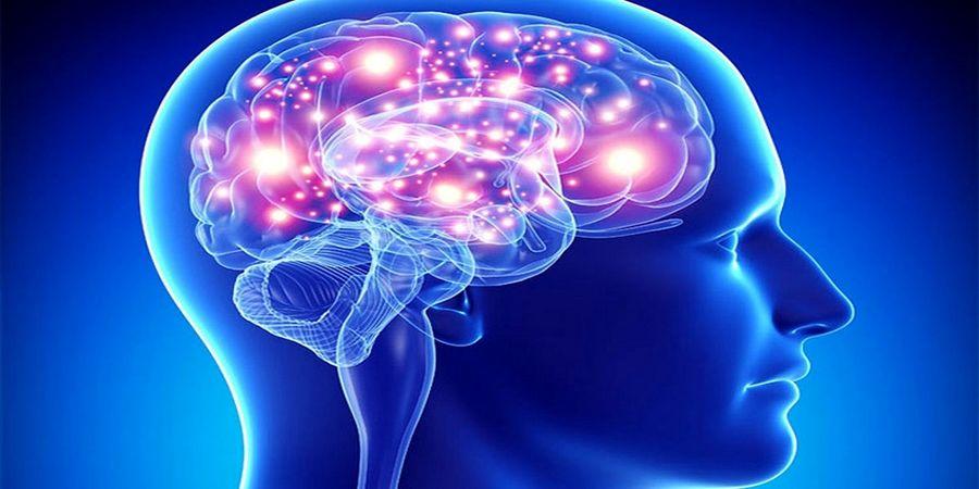 با نحوه کار مغز آشنا شوید