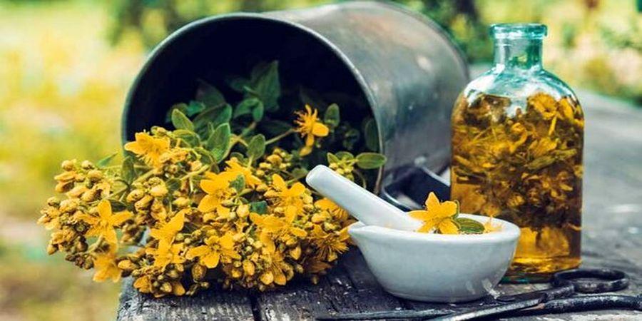 گلی که به دلیل خواص اعجابآورش پادشاه گیاهان دارویی نام دارد