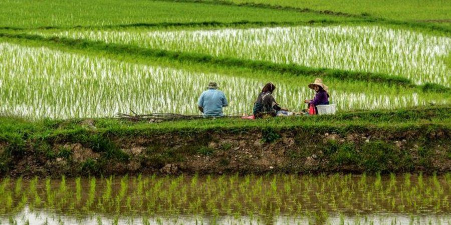 ورود مجلس به افزایش قیمت برنج