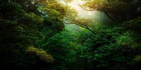 ۱۲ جنگل بسیار زیبا در سراسر دنیا را بشناسید