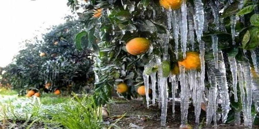 هشدار هواشناسی به کشاورزان؛ یخبندان در راه ۱۱ استان