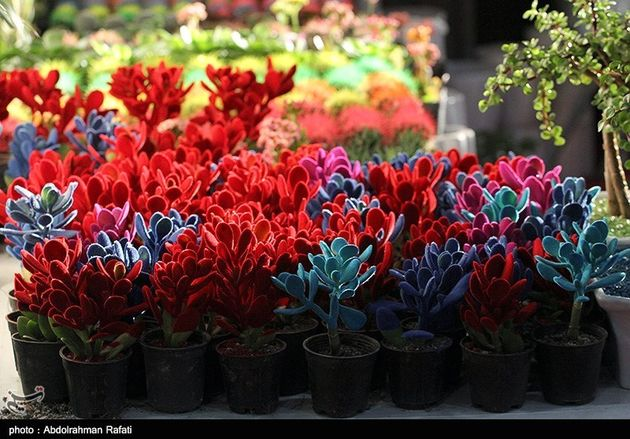 نمایشگاه گل همدان