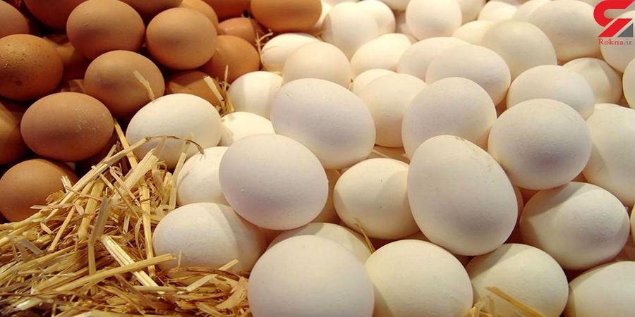 قیمت تخم مرغ ارزان می شود؟